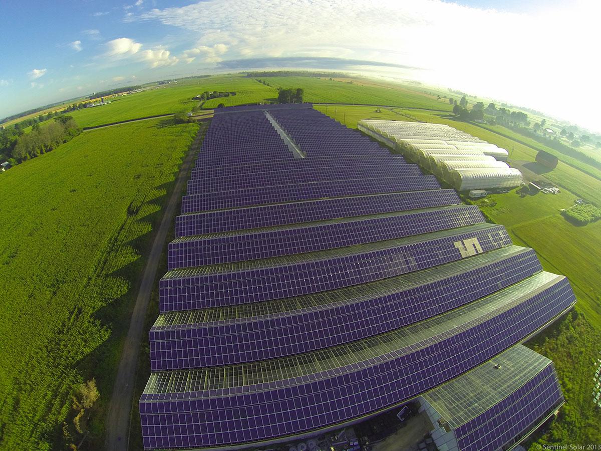 jinko solar farm