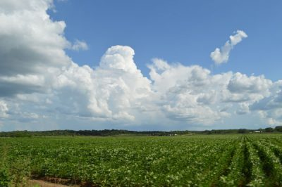 Campeche soybean field. (File photo)