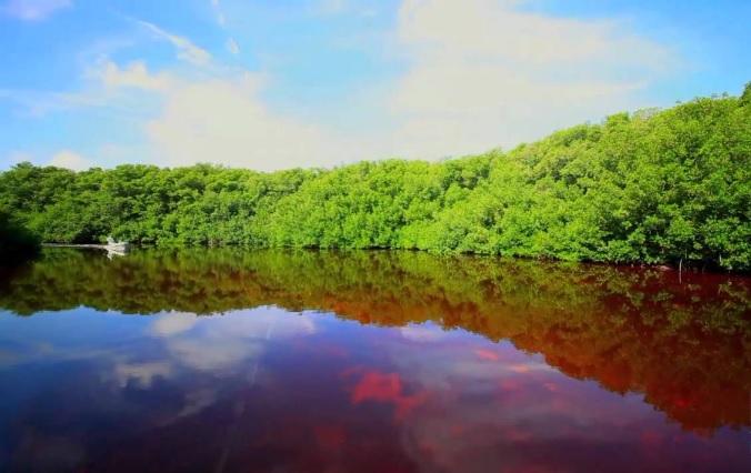 Reserva de la Biosfera Los Petenes Campeche (Photo: tucansportfishing.com)