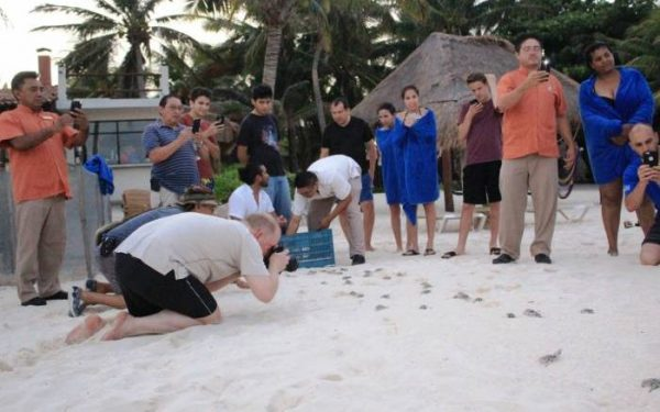 Sea turtle hatchlings were released this week at Playa del Carmen. (PHOTO: riviera-maya-news.com)