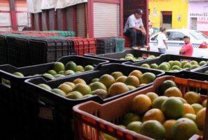 Yucatan citrus farmers achieved a good harvest this fall. (PHOTO: freshplaza.com)