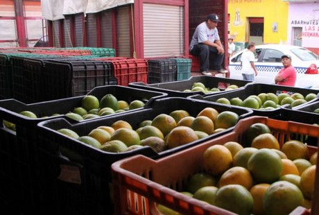 Yucatan citrus farmers expect a good harvest this fall. (PHOTO: freshplaza.com)