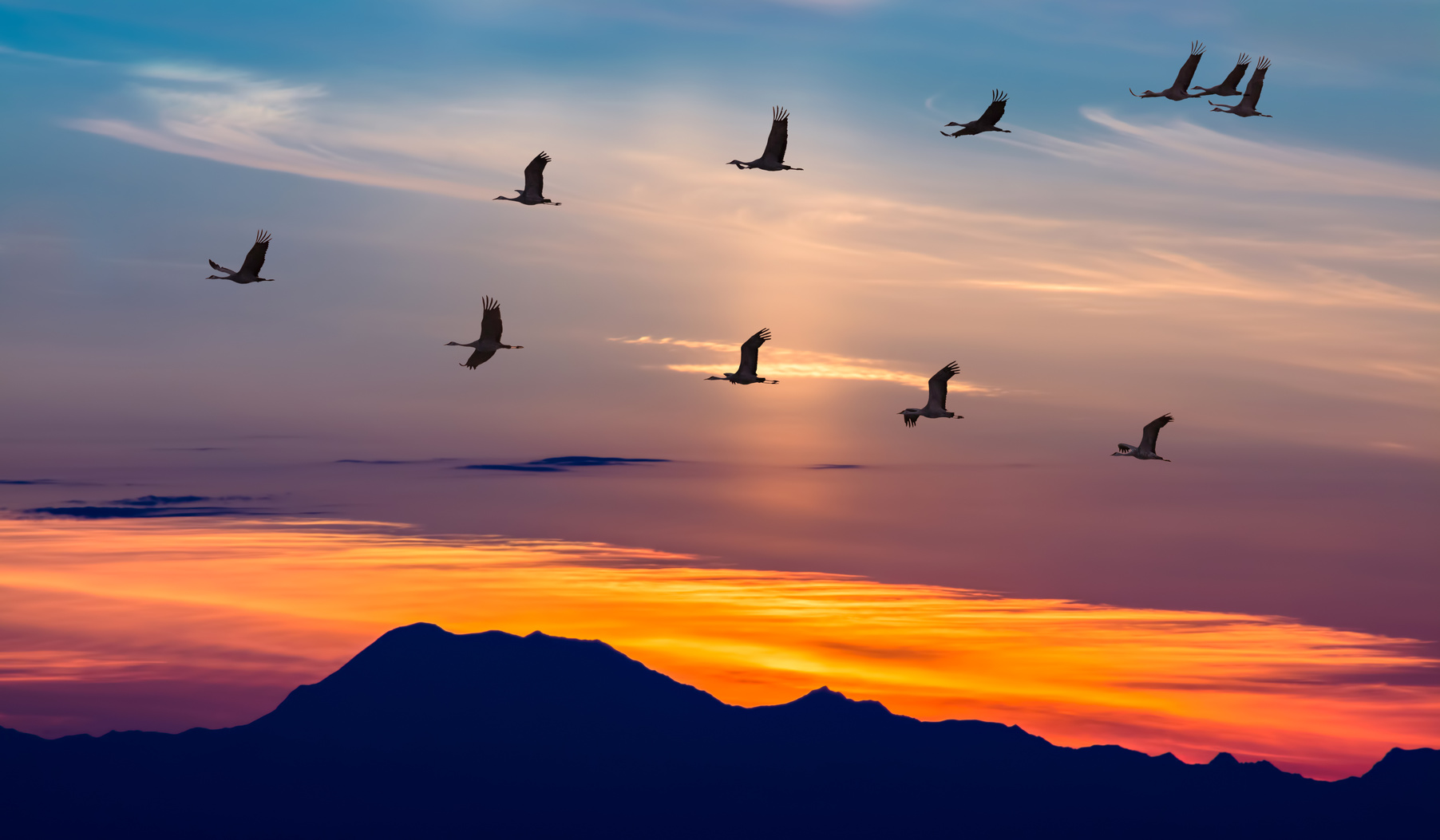 Sandhill Cranes in Flight at Sunrise Panoramic View (Photo: farmersalmanac.com)