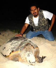 The author with a Carey sea turtle in the Yucatan Peninsula. (PHOTO provided)