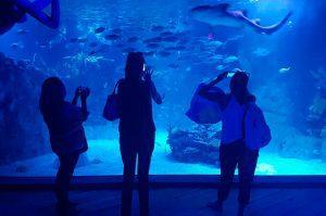 L'Aquarium in Playa del Carmen. (PHOTO: quintanaroohoy.com)