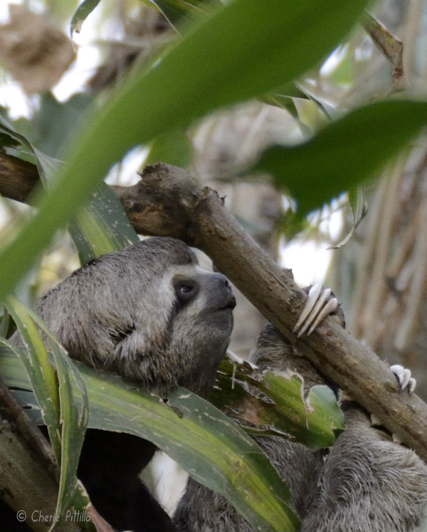 A super sleuth sloth snack searches