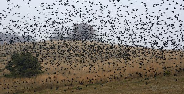 Flock departs