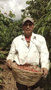 Guatemalan coffee harvester. (PHOTO: Ben Chaplin)