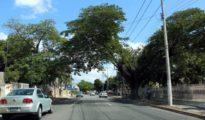Traffic disruptions will result from repair work on Avenida Colon starting Jan. 21. (PHOTO: sipse.com)
