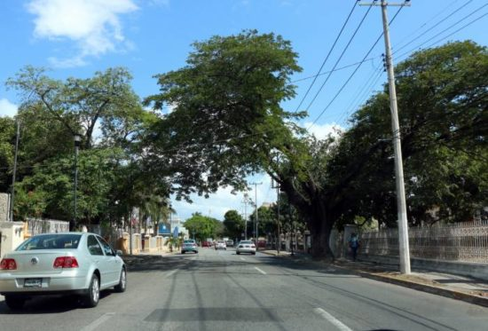 Traffic disruptions will result from repair work on Avenida Colon starting Jan. 22. (PHOTO: sipse.com)
