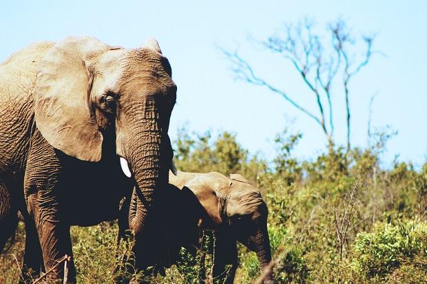 elephants-cristy-zinn