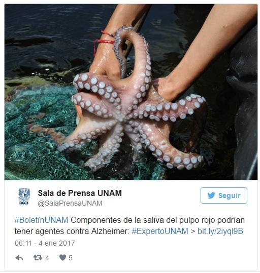 octopus-tweet