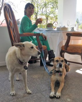The writer's wife with her two dogs at a Puebla restaurant. (PHOTO: Chuck Bolotin)