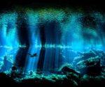 Underwater Photographer of the Year 2017 category winning shot from Yucatan cenote. (PHOTO: Nick Blake)