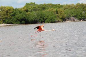 Rio Lagartos flamingo (PHOTO: busybeetraveler.wordpress.com)