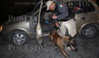 Police canine unit completes vehicle inspection near Merida. (PHOTO: Por Esto)