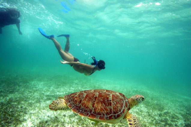Diving with turtles at Akumal's Bay (Photo: La Verdad)