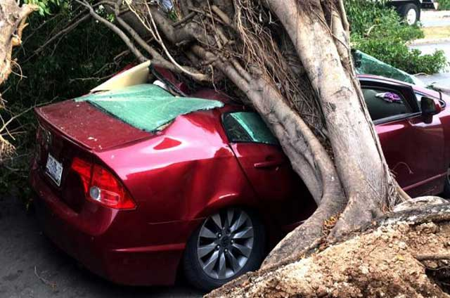 Many Trees falled on cars during the storm (Photo: La Verdad)