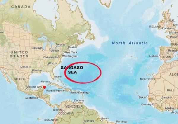 Sargaso-Sea
