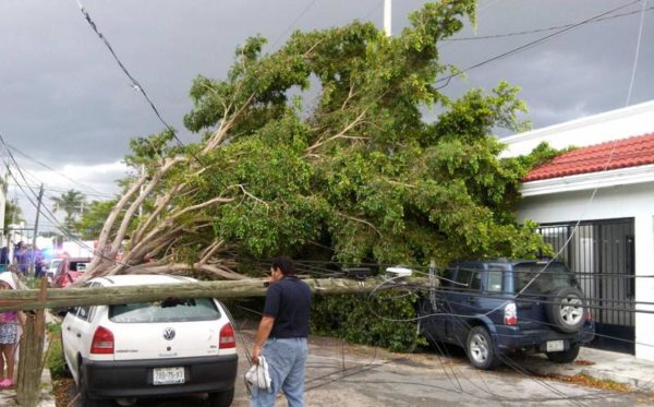 The trees fall down due to their bad state (Photo: Google)