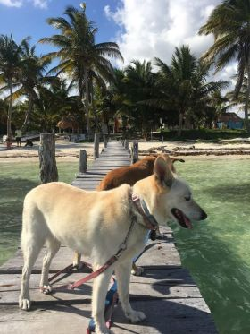 Dogs on a pier in Mahahual. (PHOTO: Chuck Bolotin)