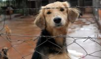 Stray cats and dogs look for a place to stay if a hurricane reaches Cozumel Photo: El Diario La Verdad
