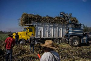 Mexican sugar cane workers load a truck in a Nayarit state. (PHOTO: Bloomberg)