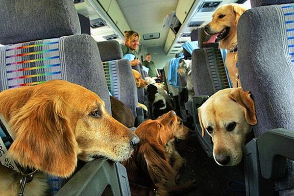 Important things to know before traveling with pets in