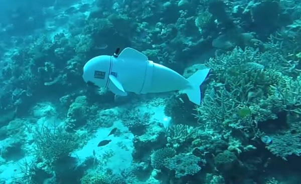 Meet Sofi The Soft Robotic Fish The Yucatan Times