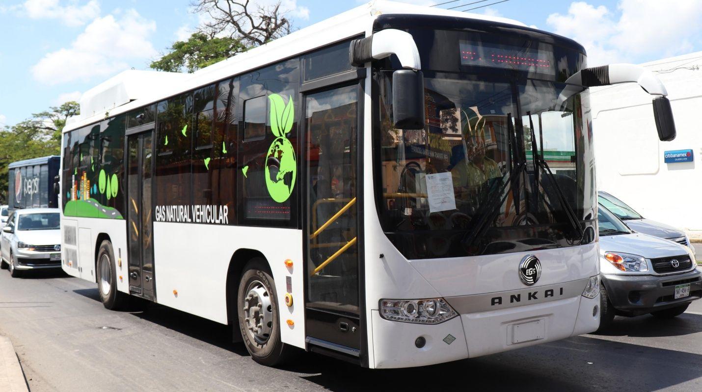 new eco bus: mérida's city buzz! – the yucatan times