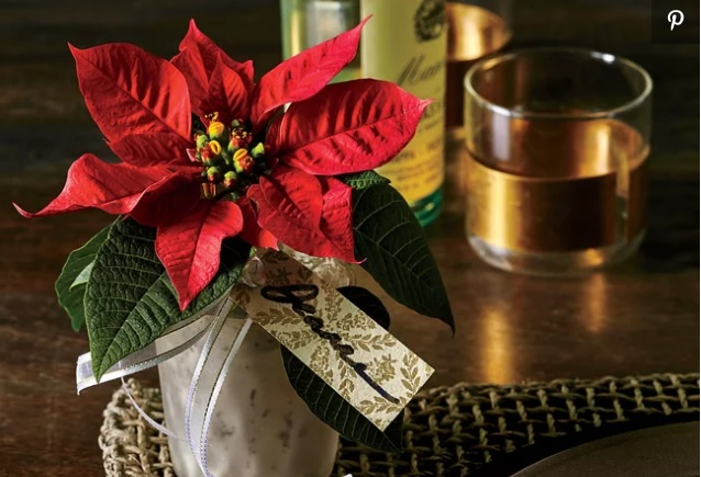"Why was the Mexican ""Noche Buena"" flower named ""Poinsettia""?"