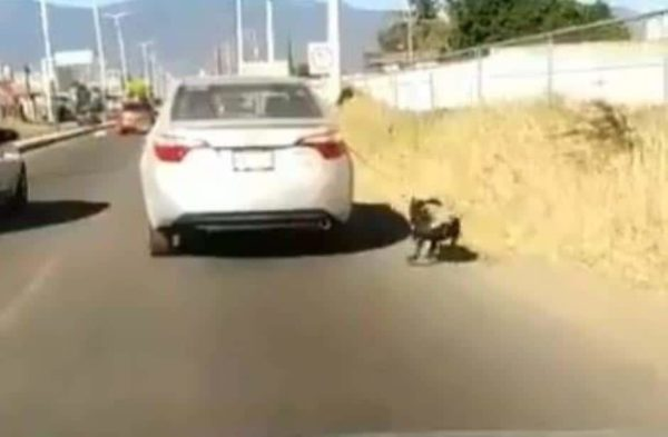 Image of: Feeding Another Case Of Animal Abuse In Oaxaca Mexico Woman Drags Dog With Car Video The Yucatan Times Another Case Of Animal Abuse In Oaxaca Mexico Woman Drags Dog With