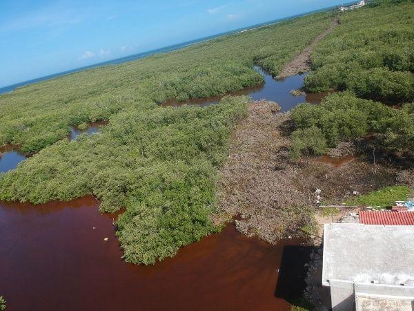 Yucatan-mangrove