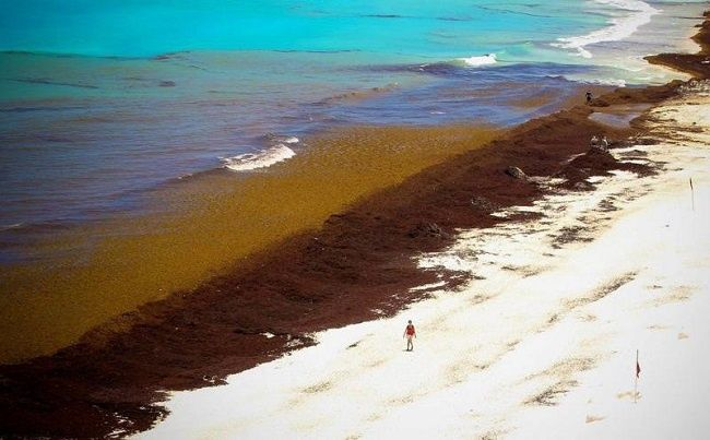Natural Protected Areas of Quintana Roo in total oblivion in the