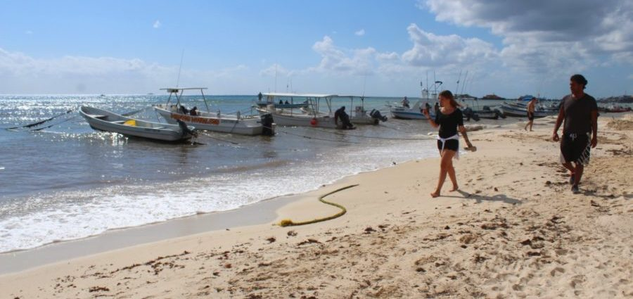 Good Morning Playa del Carmen… Sargasso decreases on your
