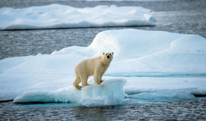 Catastrophic climate change by 2030 experts say  – The