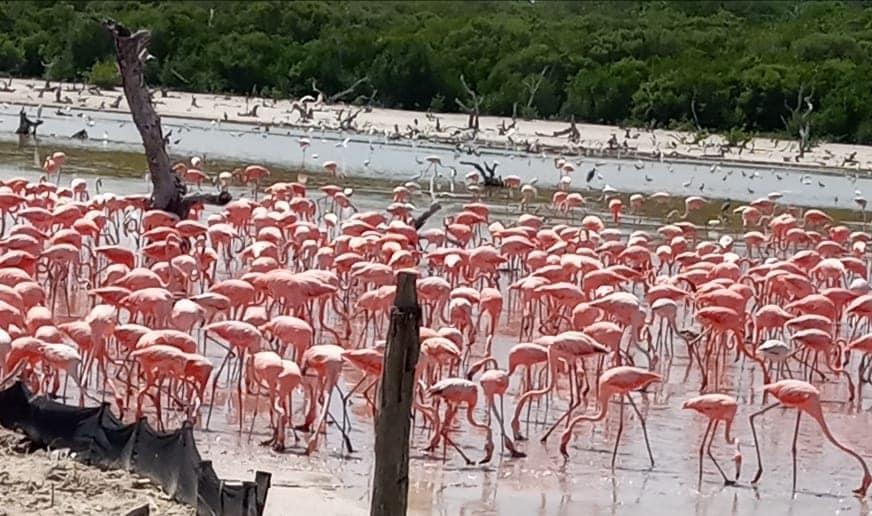 flamingos-sisal