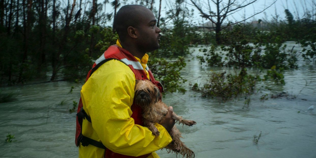 Meet those kind souls that are rescuing animals from
