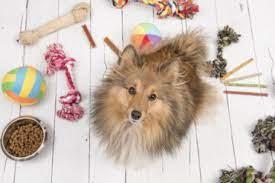 Consejos para entretener a las mascotas en casa - Mis Animales