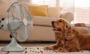Como Mantener Fresca a tu Mascota en Verano | Triada